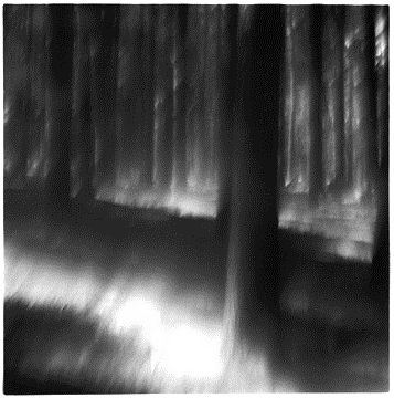 LIGHT IN THE FOREST.jpg