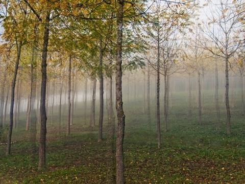 TREES IN FROG.jpg