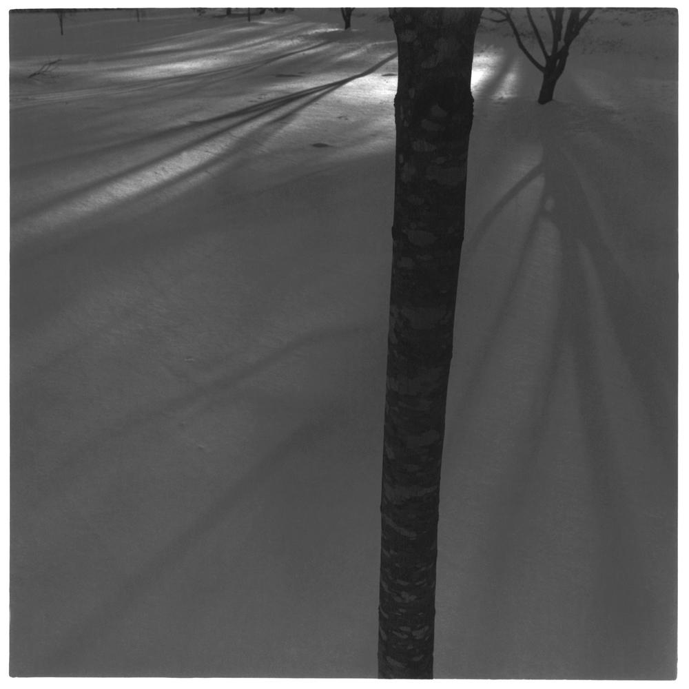 TREE IN THE SNOW, web.jpg