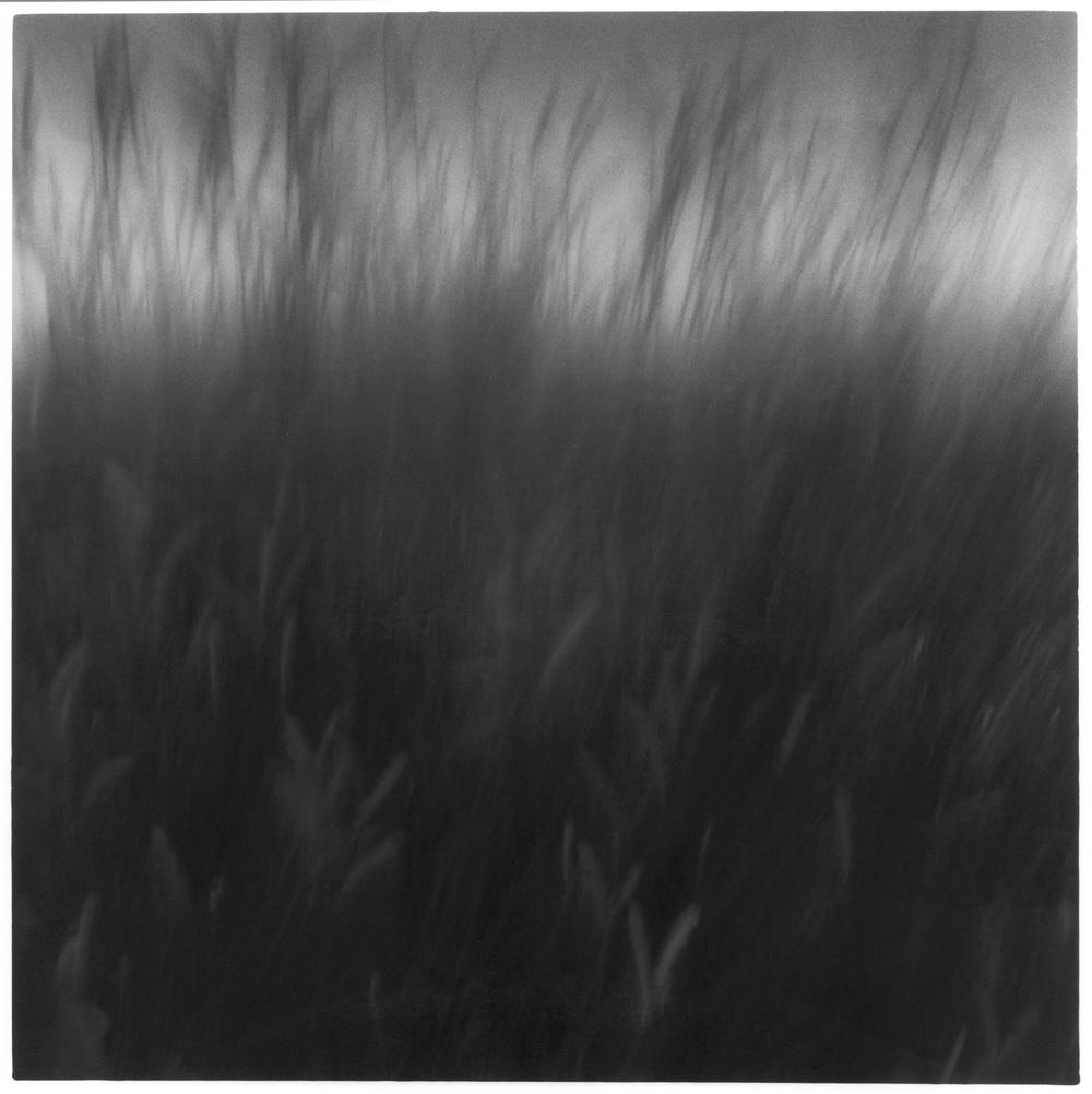 GRASS LIGHT, web.jpg
