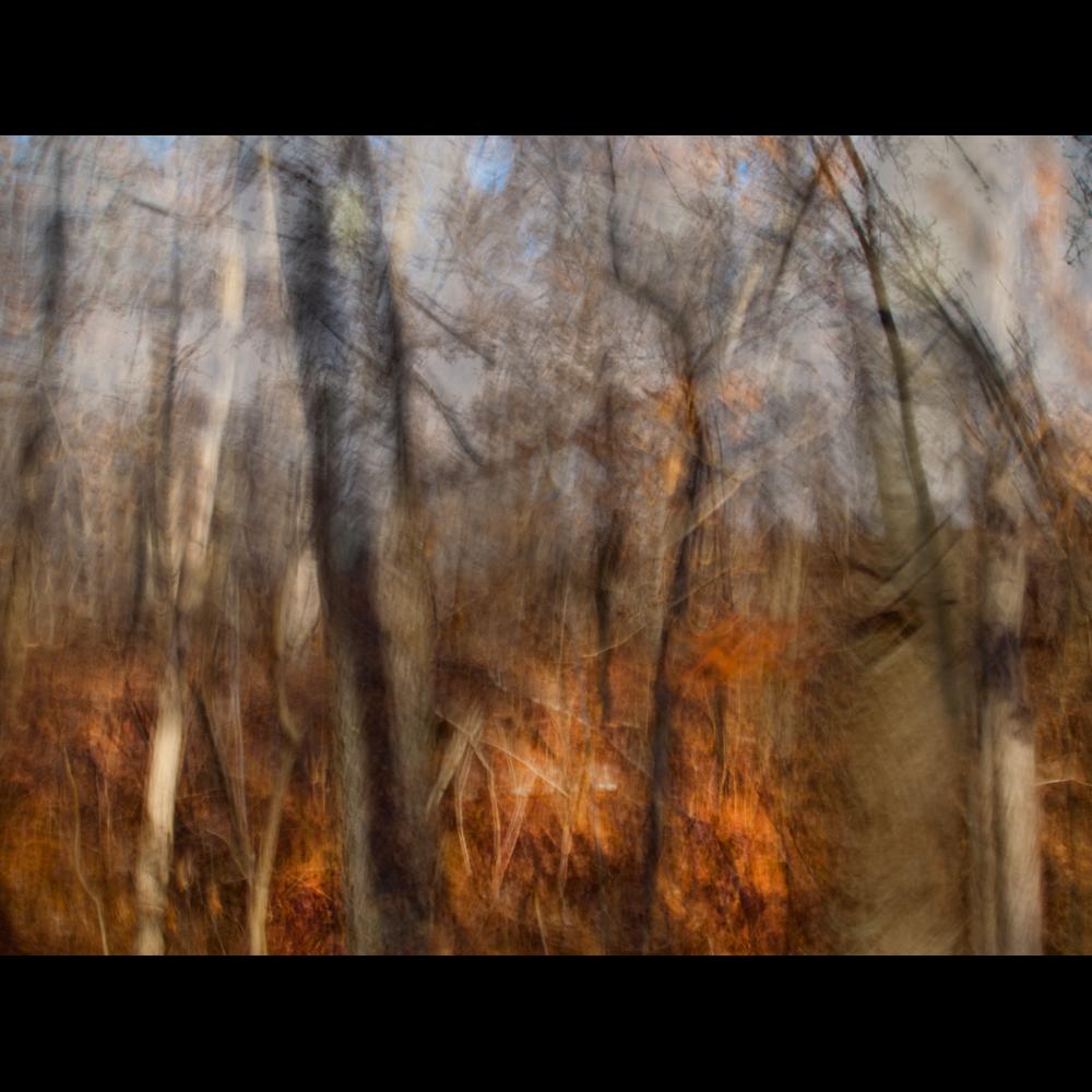 MOSAIC TREES web.png