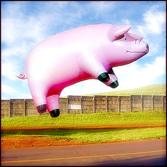 Blank Airport Flying Pig  by  Ian Burt     Creative Commoms   www.flickr.com