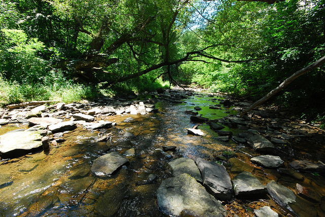 CREEK THROUGH THE GORGE  BY  J OSHUA MAYER    CREATIVE COMMONS  WWW.FLICKR.COM