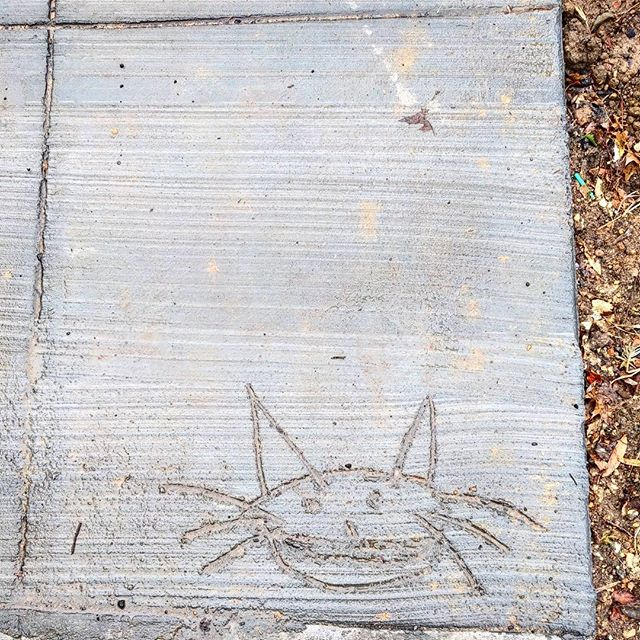 Pavement kitty 😸 #lookingdown