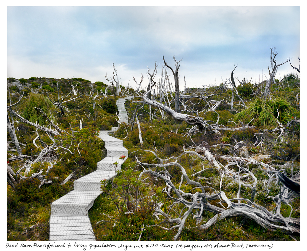 the oldest living things in the world r a c h e l s