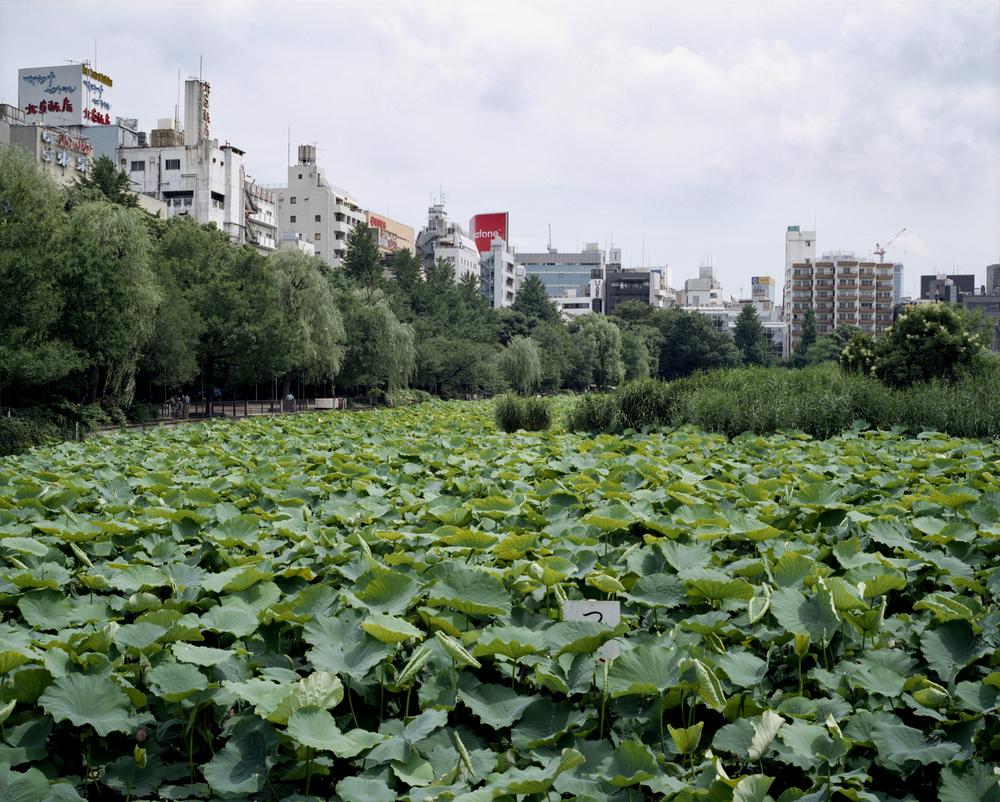 Waterlilies (Tokyo)