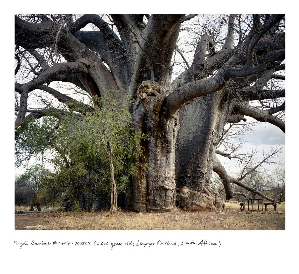 Baobab_sagole_0707_00505.jpg