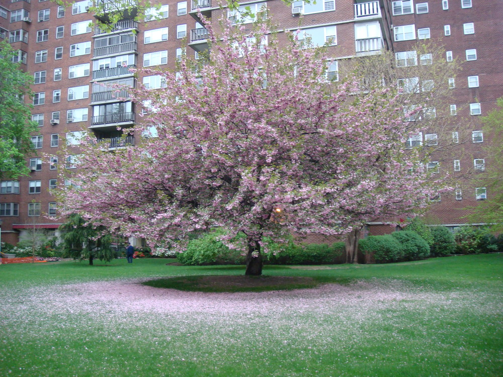 Petals, Chelsea