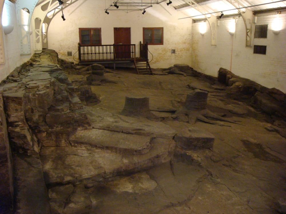 Petrified stumps, Glasgow