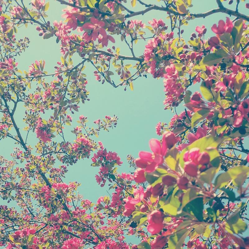 YoheiKoinuma_Floral_FlowerintheSquare_02.jpeg