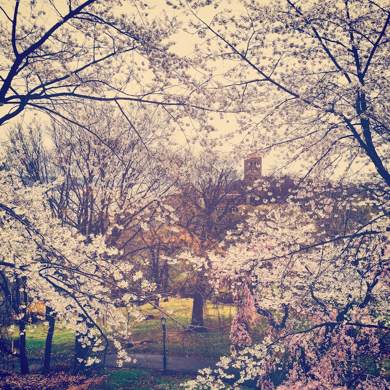 YoheiKoinuma_Floral_FlowerintheSquare_04.jpeg
