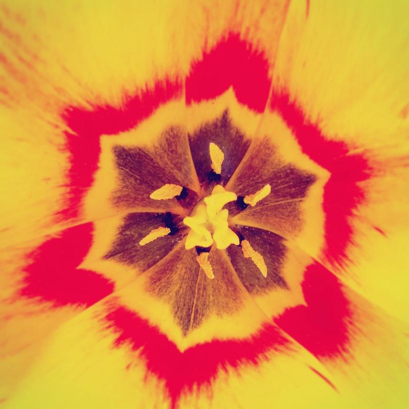 YoheiKoinuma_Floral_FlowerintheSquare_06.jpeg