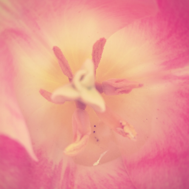 YoheiKoinuma_Floral_FlowerintheSquare_16.jpeg