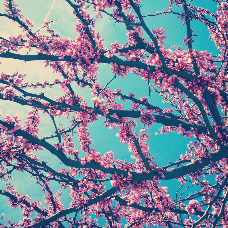 YoheiKoinuma_Floral_FlowerintheSquare_15.jpeg