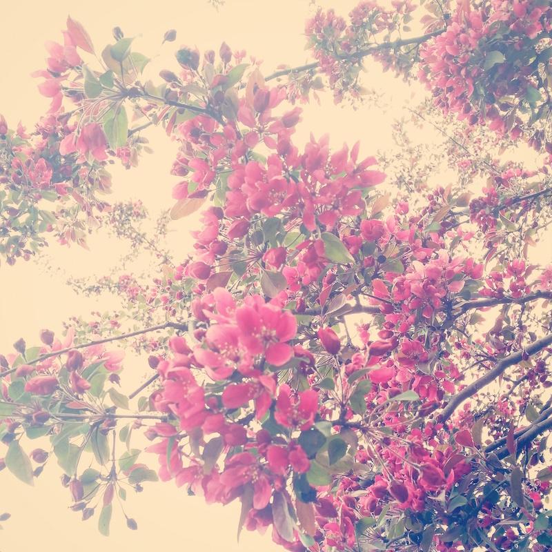 YoheiKoinuma_Floral_FlowerintheSquare_19.jpeg