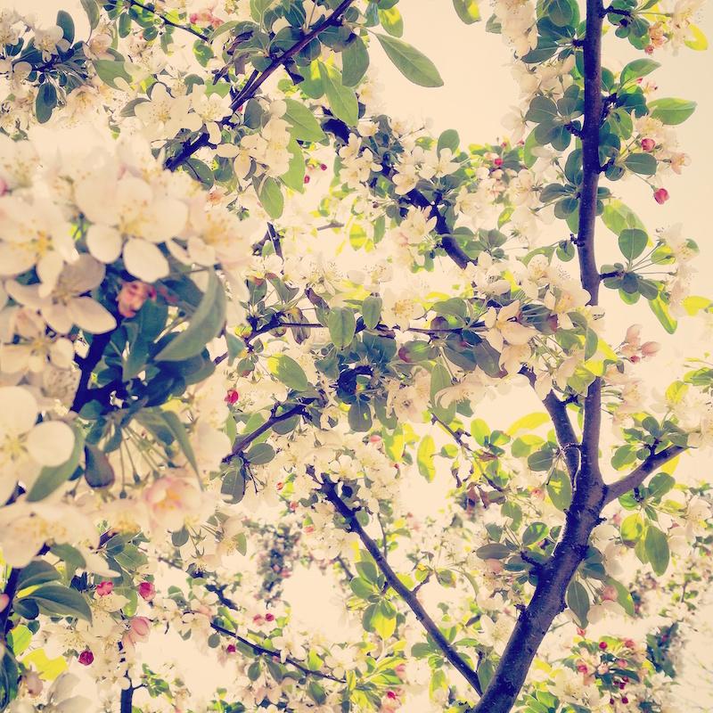 YoheiKoinuma_Floral_FlowerintheSquare_22.jpeg