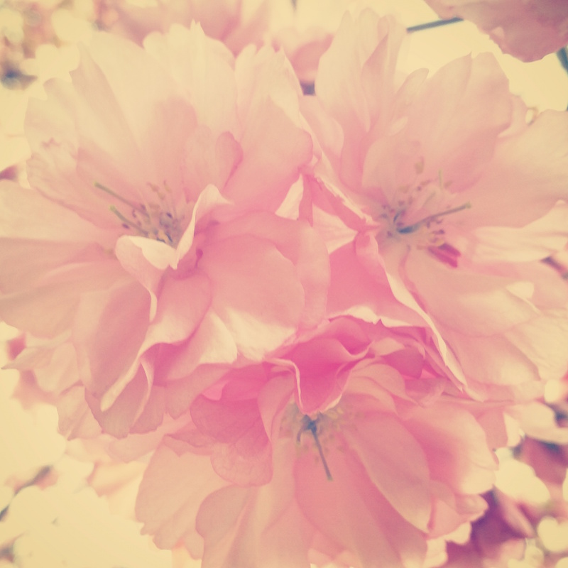 YoheiKoinuma_Floral_FlowerintheSquare_26.jpeg