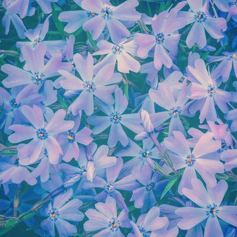 YoheiKoinuma_Floral_FlowerintheSquare_27.jpeg