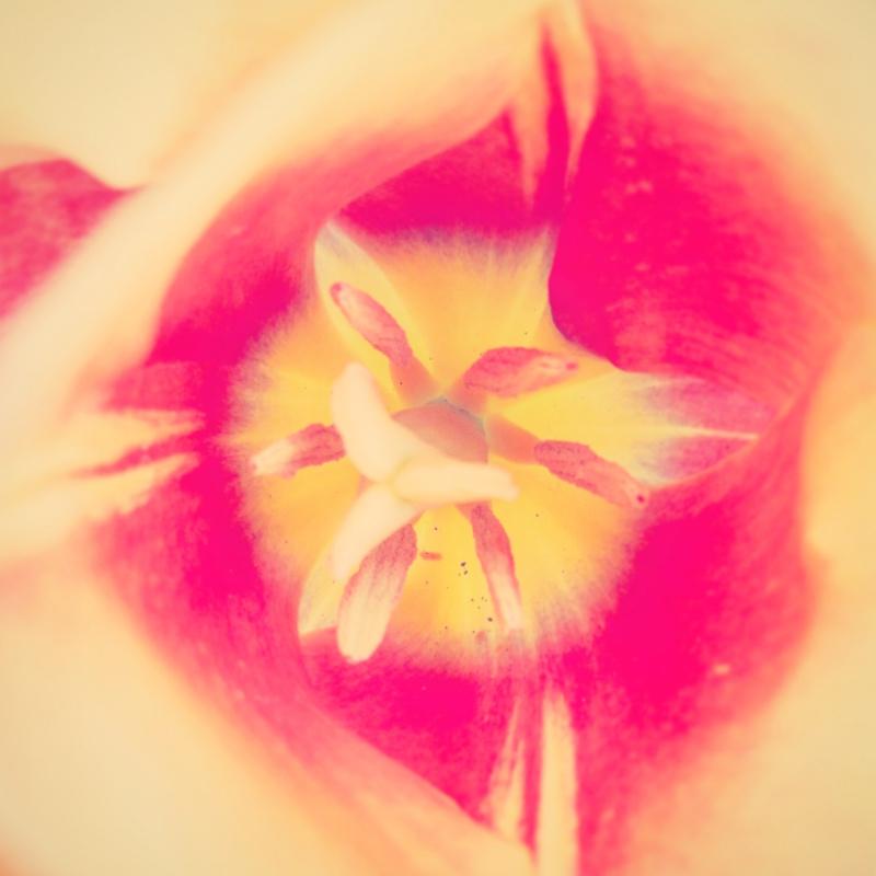 YoheiKoinuma_Floral_FlowerintheSquare_29.jpeg