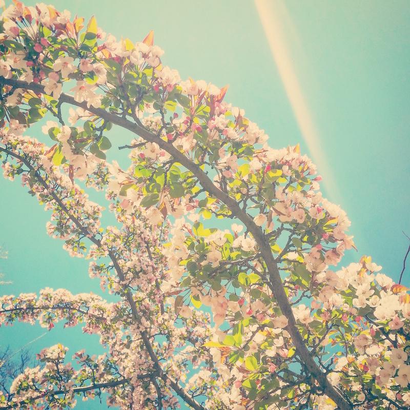 YoheiKoinuma_Floral_FlowerintheSquare_30.jpeg