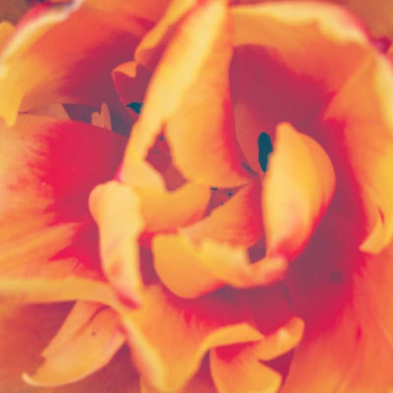 YoheiKoinuma_Floral_FlowerintheSquare_32.jpeg