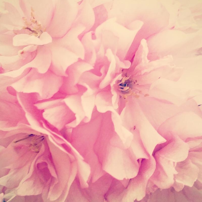 YoheiKoinuma_Floral_FlowerintheSquare_36.jpeg