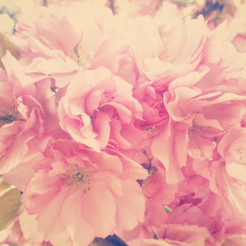 YoheiKoinuma_Floral_FlowerintheSquare_37.jpeg