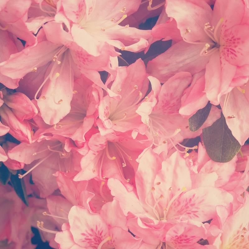 YoheiKoinuma_Floral_FlowerintheSquare_38.jpeg