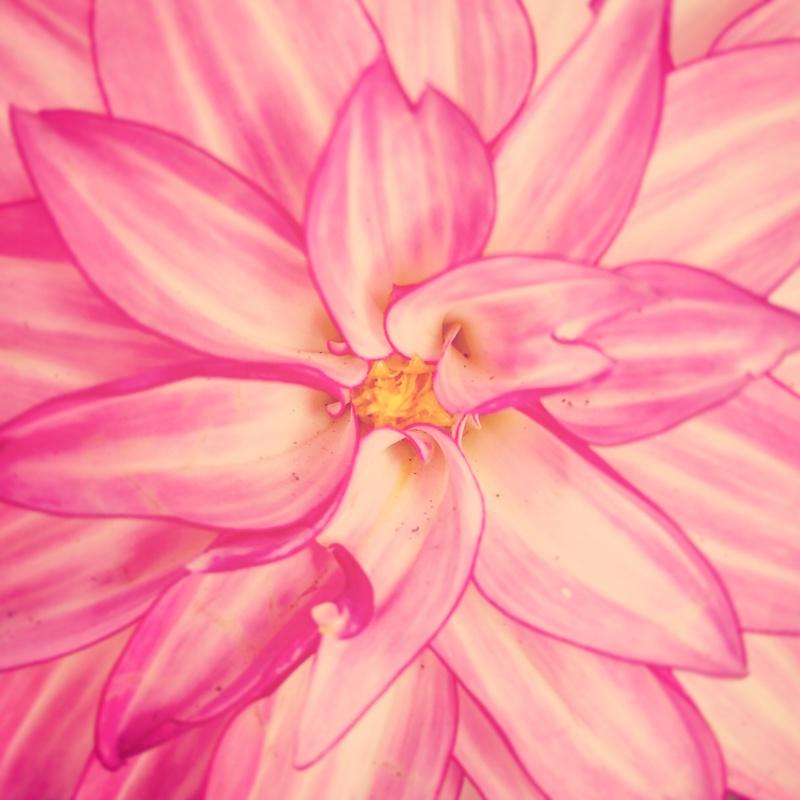YoheiKoinuma_Floral_FlowerintheSquare_39.jpeg