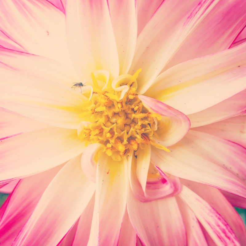 YoheiKoinuma_Floral_FlowerintheSquare_42.jpeg