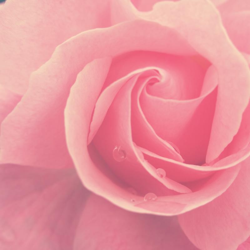 YoheiKoinuma_Floral_FlowerintheSquare_53.jpg