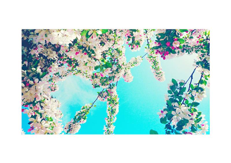 02_IBM_Flower-Mandala.jpg