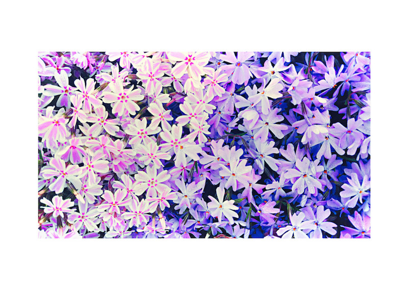 03_IBM_Flower-Mandala.jpg