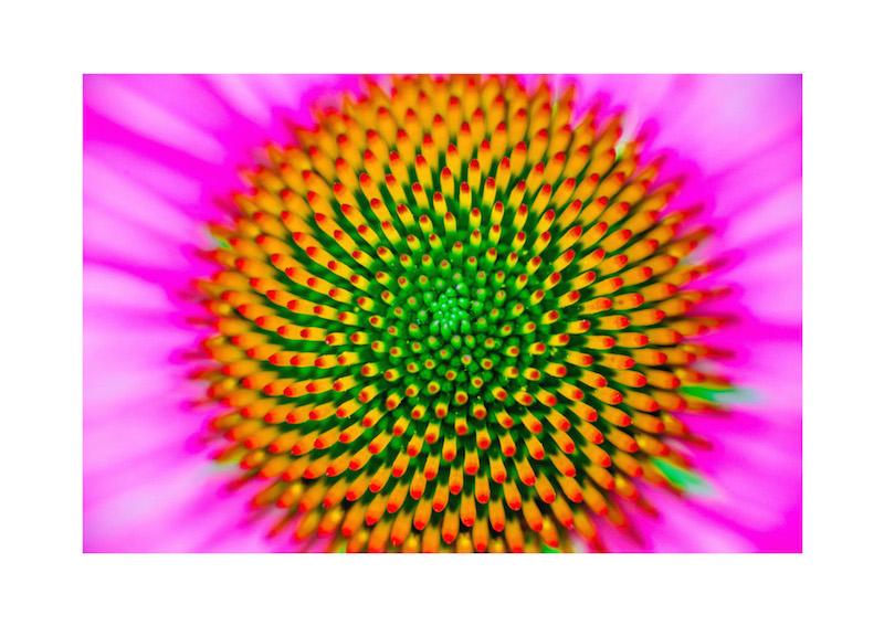 06_IBM_Flower-Mandala.jpg