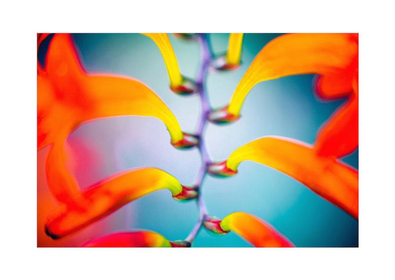 07_IBM_Flower-Mandala.jpg