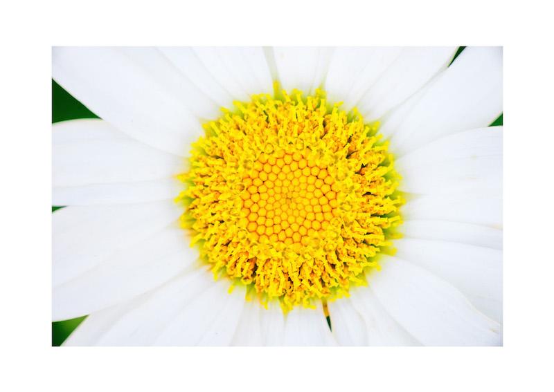 10_IBM_Flower-Mandala.jpg