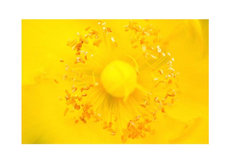 12_IBM_Flower-Mandala.jpg