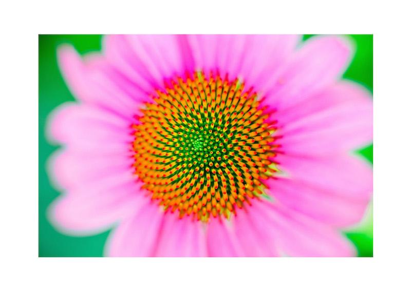 13_IBM_Flower-Mandala.jpg