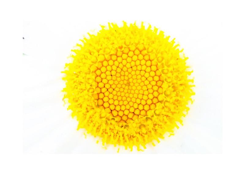 16_IBM_Flower-Mandala.jpg