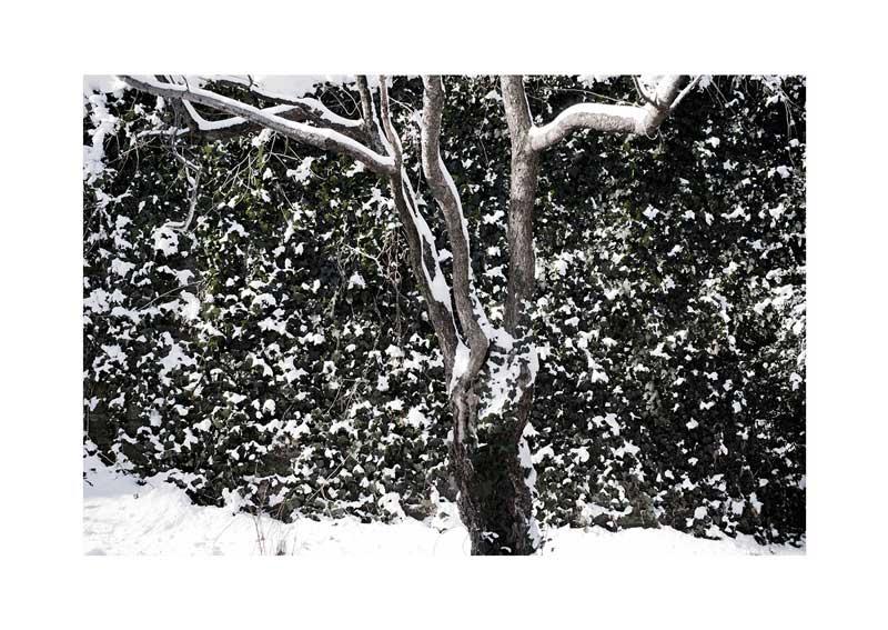 YoheiKoinuma_PhotoSeries_What-the-Blizzard-Broght_2014_06.jpg