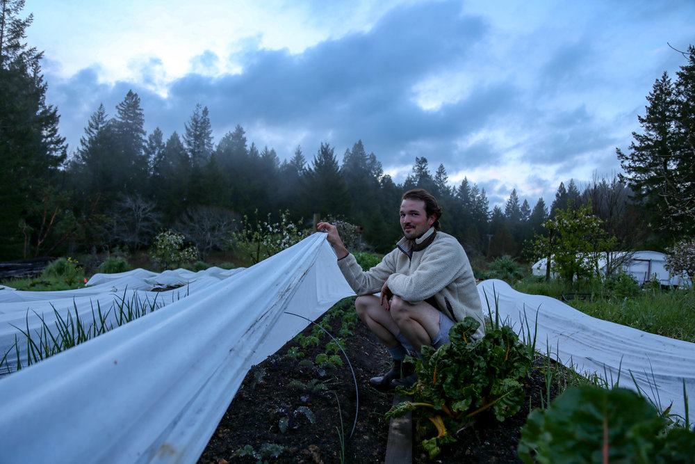 Dan with some of our new beds: butter lettuce, radicchio, fennel, baby kale, carrots, pea shoots, onions