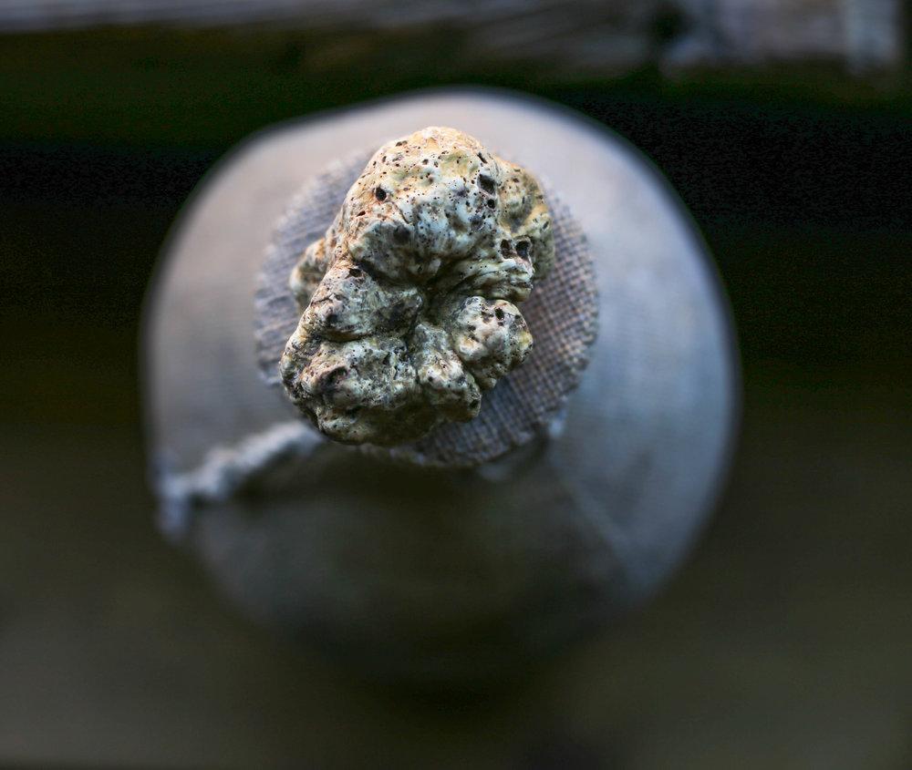 Truffle d'Alba …