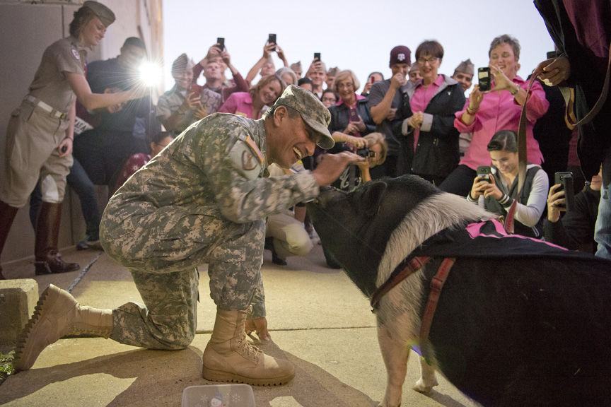 Texas A&M Corps of Cadets Brig. Gen. Joe E. Ramirez Jr. shares the spotlight with 6-year-old Vietnamese miniature potbellied pig Reginald in front of Ramirez�s office at Wednesday�s Kiss the Pig on Campus event. Ramirez received the most votes to kiss the pig in a fundraiser put on by the Corps of Cadets� Squadron 18, with proceeds going to the National Breast Cancer Foundation and the Pink Alliance. Ramirez said he was more than happy to take part in the event, noting that his mother died after a struggle with breast cancer.