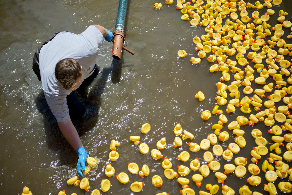 College Station Water and Utilities employee Daniel Pall tries to keep the ducks on a row at the start line of the 2016 Ducky Derby, during the Brazos Valley Earth Day festival, Saturday, April23, 2016, at Wolf Pen Creek Park in College Station.