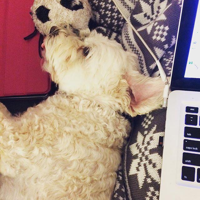 #snuggles . . #dogsofinstgram #puppytongue #cozy