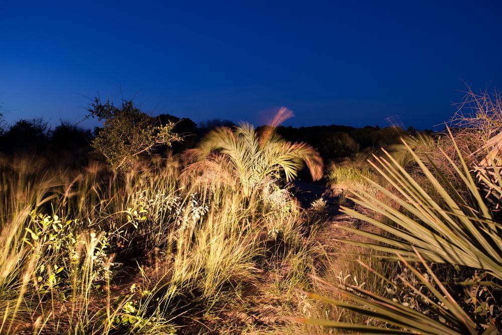 "21°43'16.6""S 35°27'21.8""E ,  05/02/2014, 1758 Raffia palm, eastern dunes, Bazaruto"