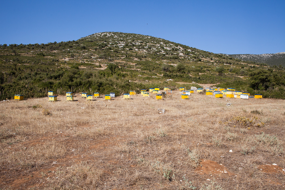 "39°07'08.6""N 22°52'27.3""E , 01/09/2014, 1603 Honeybee boxes,  Sourpi-Amaliapolis County Road, Magnesia, Greece"
