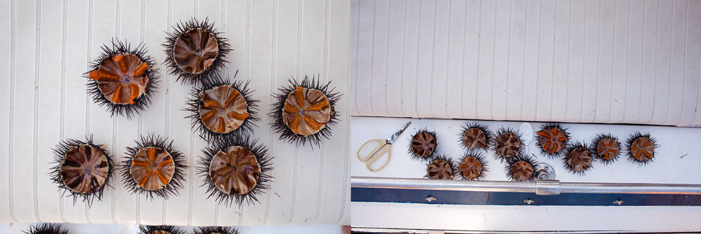 "39°10'36.1""N 23°02'48.1""E , 31/08/2014, 1143 Urchins, deck of the Moondance,  Pagasetic Gulf, Greece"