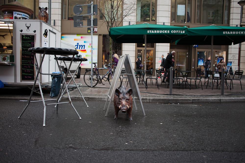 "50°06'27.4""N 8°39'56.8""E ,  16/12/2014, 1143 Wild boar, Kaiserstrasse, Frankfurt, Germany"