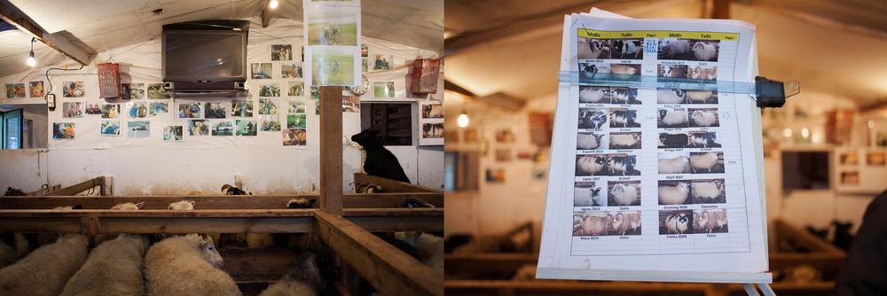 """66°03'37.6""""N 18°39'31.5""""W ,   24/12/2014, 1310 and 1333  Jón's  sheep register, Brekkuland,  Ólafsfjörður, Iceland"""